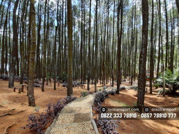 Gardu Pandang Hutan Pinus